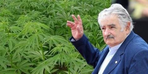 José Mujica a signé la loi autorisant la légalisation du cannabis dans son pays. ©DR